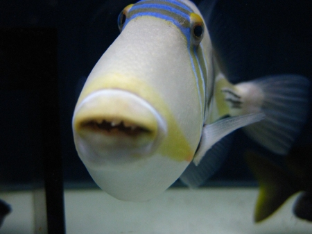 Fish are F***ING HILARIOUS.